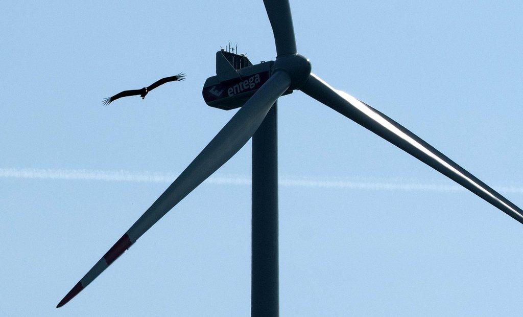 Die Kritiker der Windpark-Pläne fürchten, dass Vogelarten wie etwa der Schwarzstorch durch Rotoren gefährdet werden. Foto: Stephan Hördt/dpa