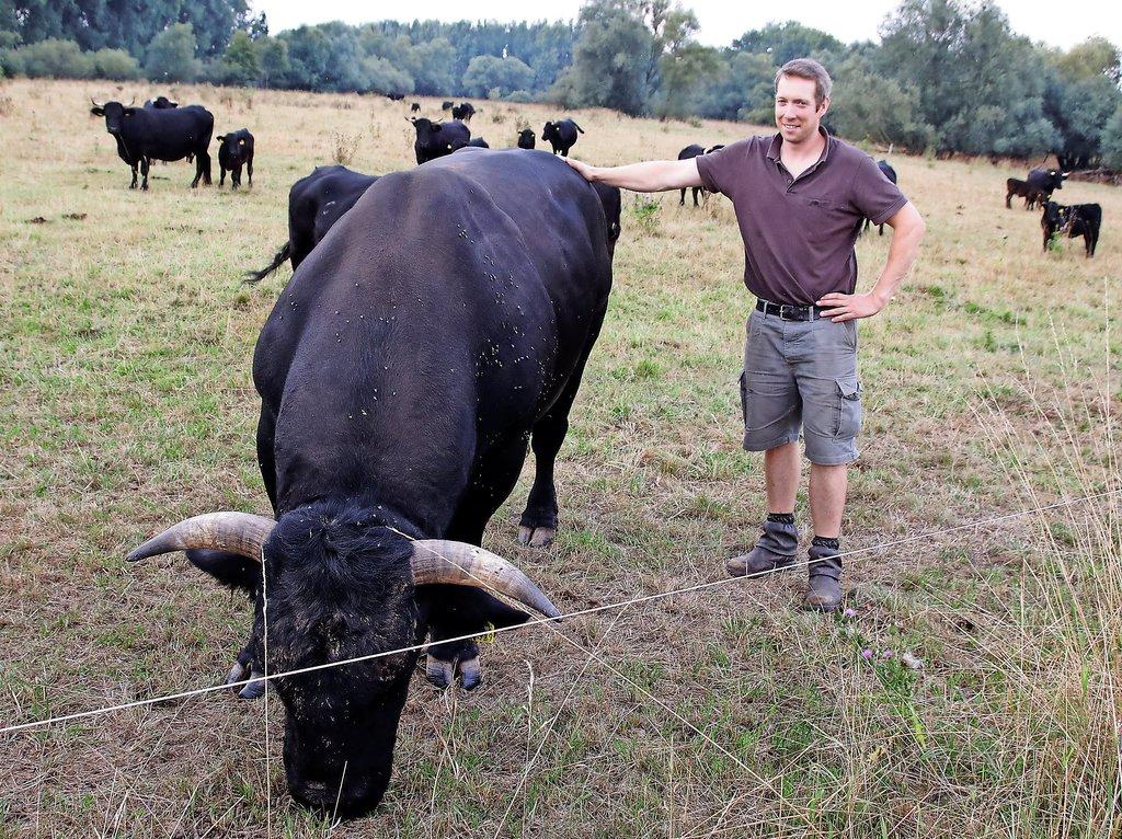 Keine Angst vor großen Tieren: Landwirt Georg Meyer hält Welsh Black, eine Rinderrasse aus Wales, die als ruhig, umgänglich und robust gilt.