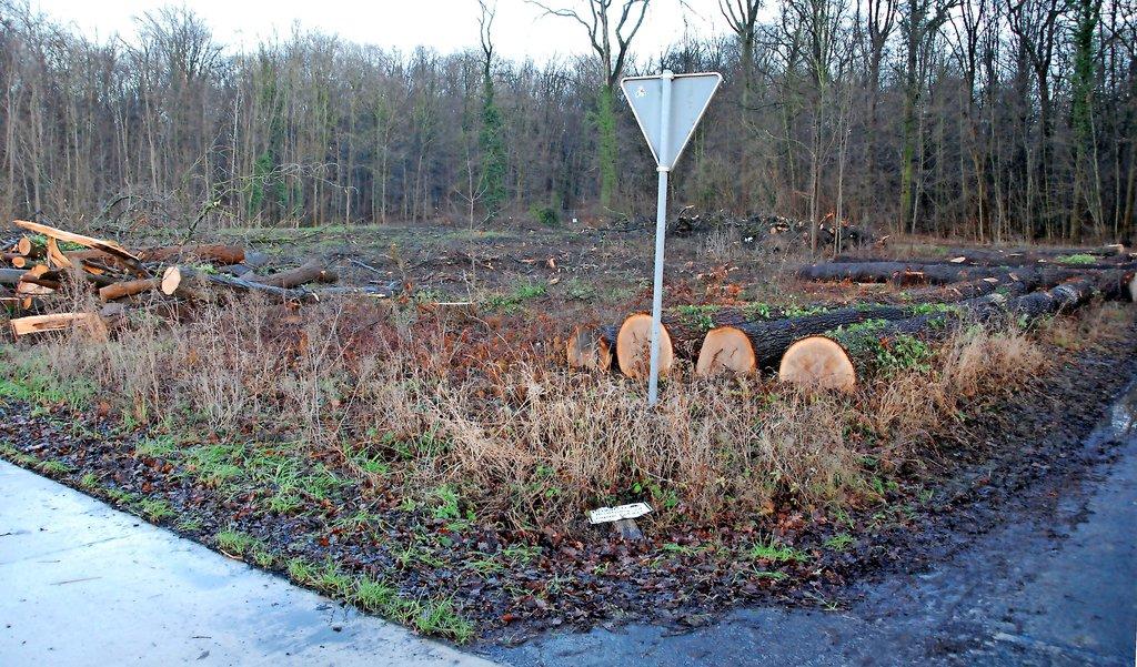 Auf einer Fläche von rund 2500 Quadratmetern wurden die Bäume gerodet.foto: Hans-Theo Wiechens