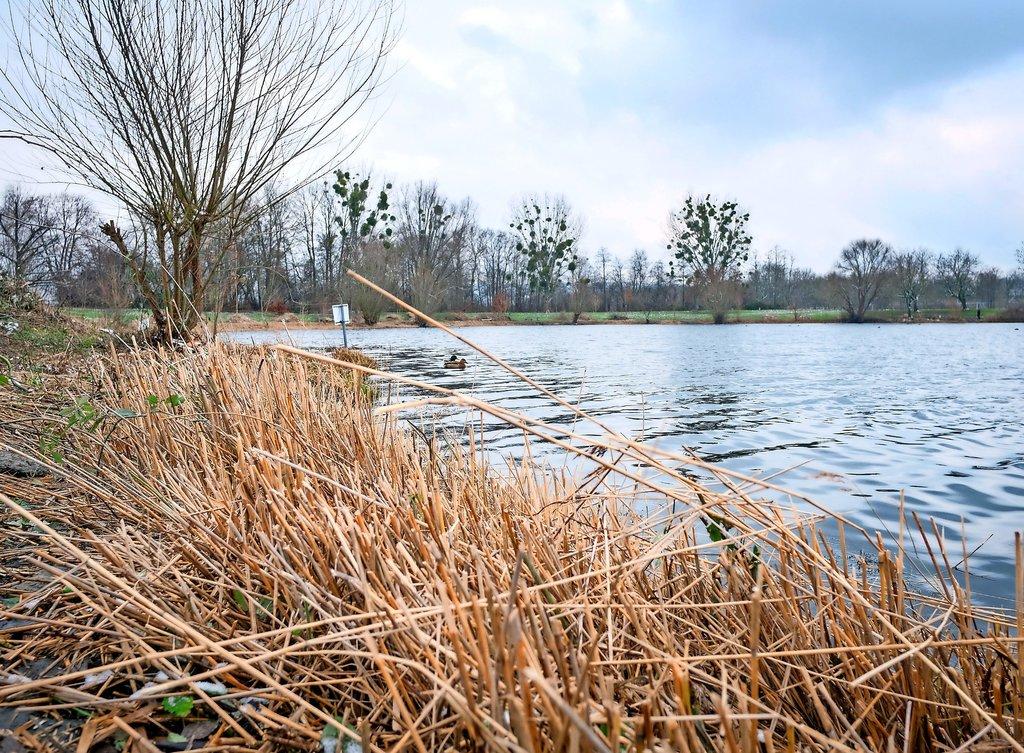 Vom Schilf am Hohnsensee ist nach den Arbeiten der Sportfischer nicht viel übrig. Doch das wachse schnell nach, meint der Verein.Foto: Chris Gossmann