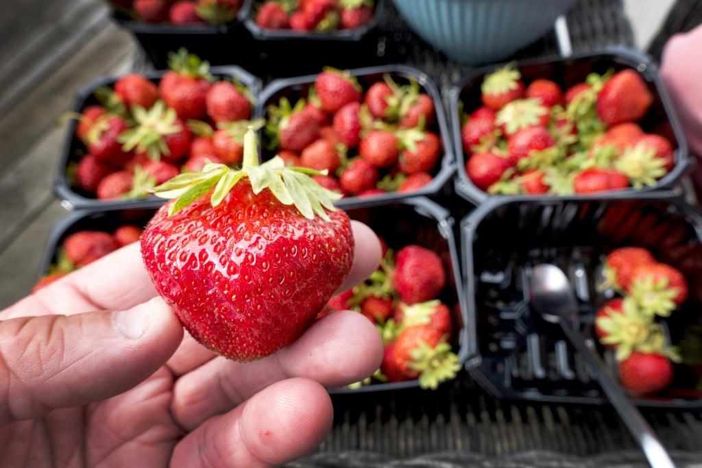 JORDBÆRBANK: Telemarkspolitikere fra Sp og Høyre vil at regjeringen oppretter et plantehvelv i Telemark – for blant annet jordbær.