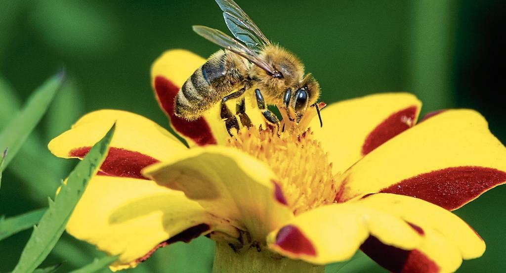 Der Insektenschutz gehört mit zu den drängendsten Zielen der Umweltpolitik. BILD: Cindy Riechau/dpa