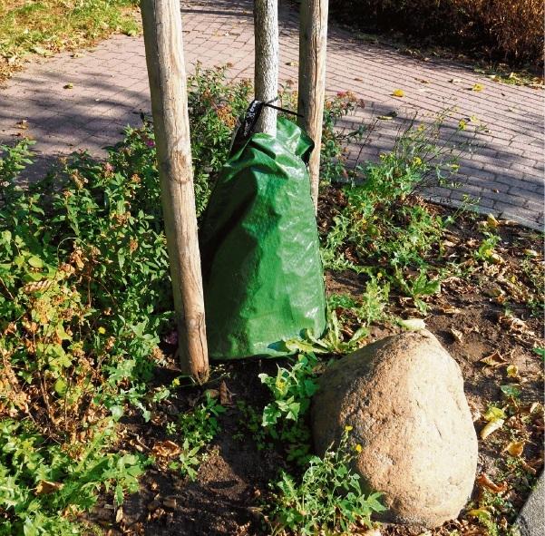 Einer von derzeit 200 Wassersäcken an jungen Bäumen im Oldesloer Stadtgebiet.   Bauhofmitarbeiter Marcel Albrecht  (Foto oben) wässert in der Bangertstraße die jungen Kirschbäume. Der 40-Tonner fasst 20000 Liter Wasser.