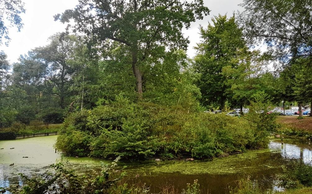 """Die """"Bürgermeisterinsel"""" im Oldesloer Bürgerpark könnte zu einer einzigartigen Veranstaltungsfläche werden.nie"""