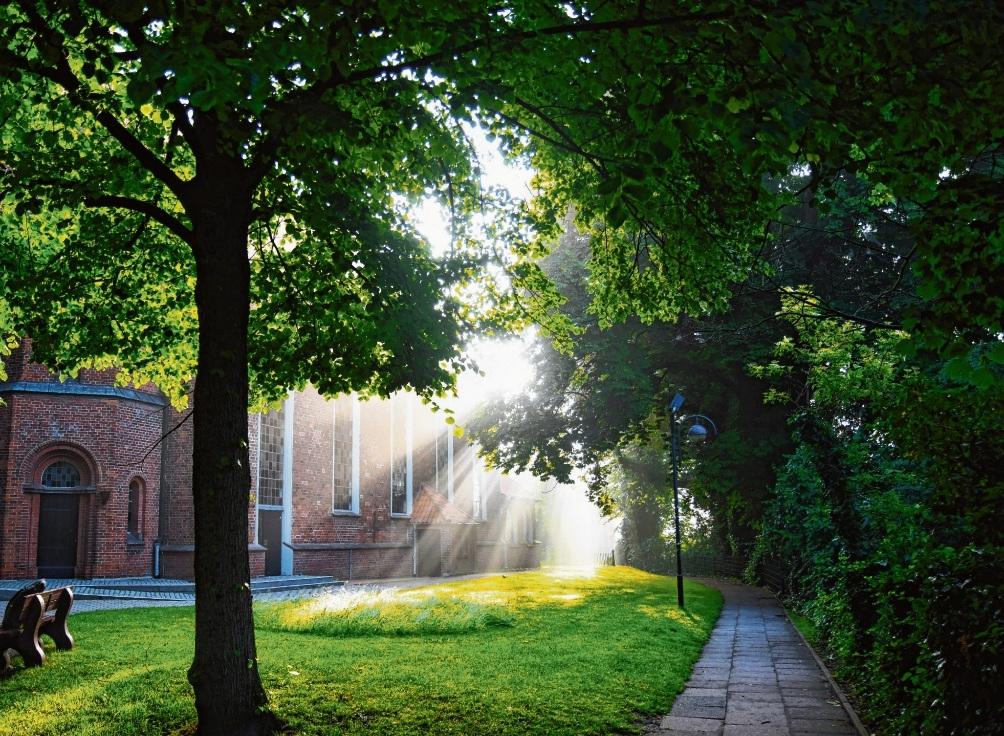 """Ein """"Oldesloer Klimawald"""" kann ähnlich wie der Kirchberg eine grüne Oase in der Stadt sein. Niemeier"""