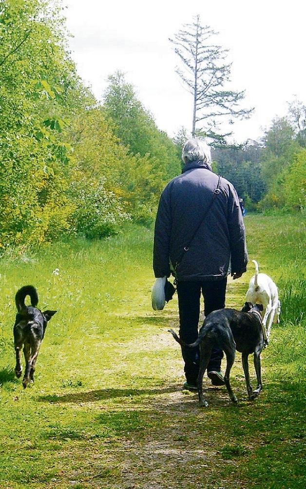 Der Hundewald: Eine Fläche, auf der  die  Vierbeiner sich frei bewegen können.st