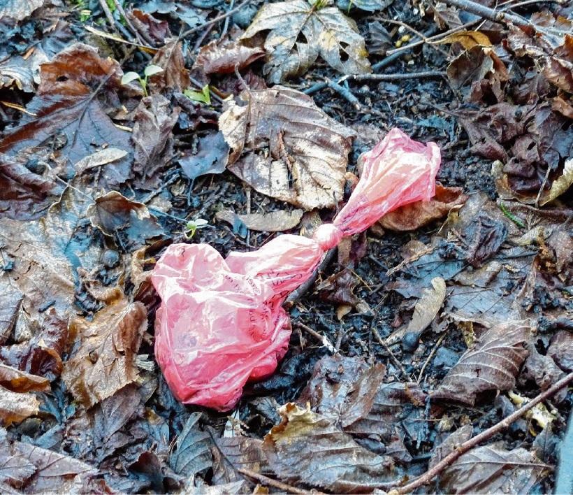 Verstärkt   liegen Hundehaufen in   Plastiktüten in der Natur.