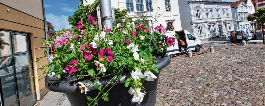 Die Blumenampeln hängen wieder in Bad Oldesloe.Nie