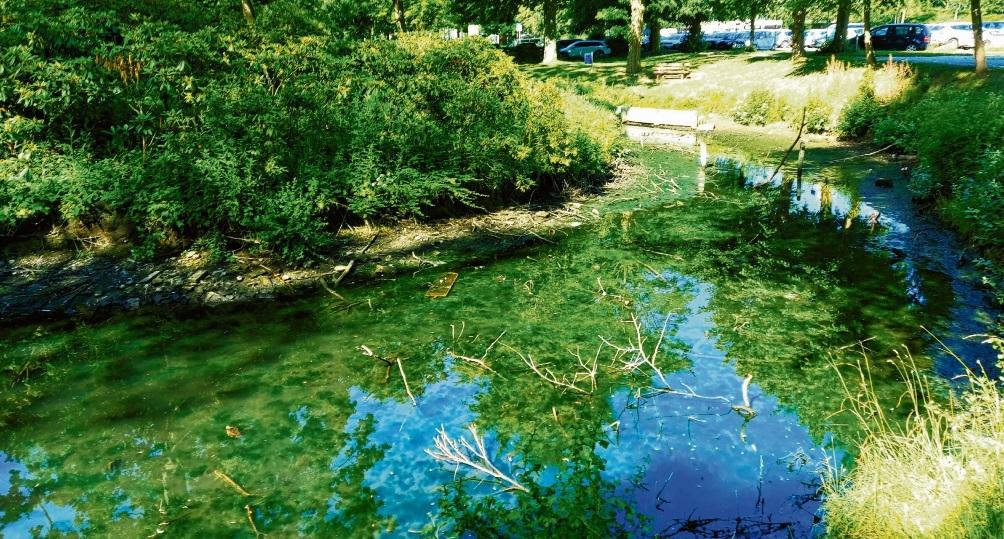 Verschlammt: Gewässer an der Bürgermeisterinsel in Bad Oldesloe.Nie
