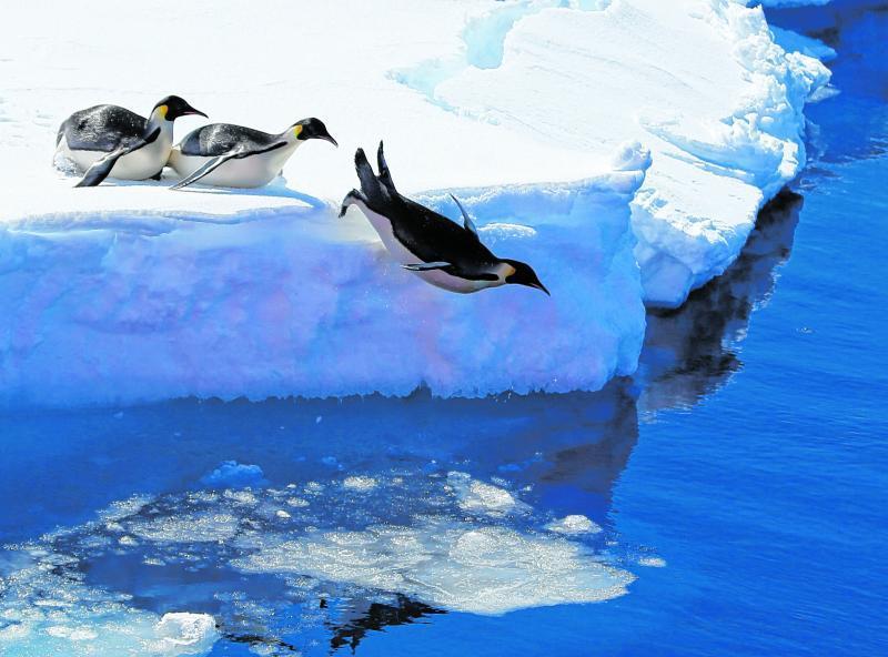 Pinguine auf Eisschollen:So stellt man sich die Antarktis vor.