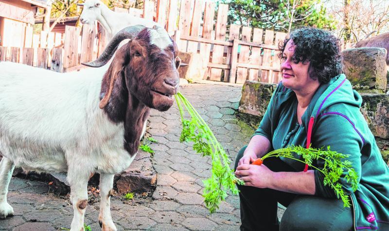 Inga Riebel vom Tierpark Bochum füttert eine Ziege mit Karotten. Als Tierpflegerin ist sie für das Futter von mehr als 4000 Tieren verantwortlich.