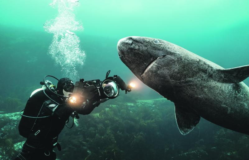 Unterwasser-Filmerin Christina Karliczek hat sich einem Grönland-Hai genähert. Diese Tiere können einige Hundert Jahre alt werden.