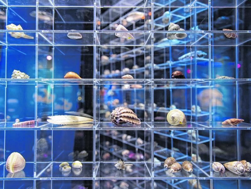 Im Deutschen Meeresmuseum in Stralsund geht alles etwas professioneller als bei jungen Privatsammlern zu. Dort werden auch Muscheln und Schneckenhäuser den neugierigen Besuchern präsentiert.